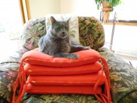 Nic on 4 pillows