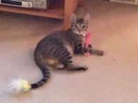 Sadie and her fuzzy stick