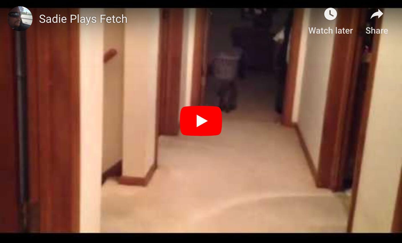 Sadie Plays Fetch