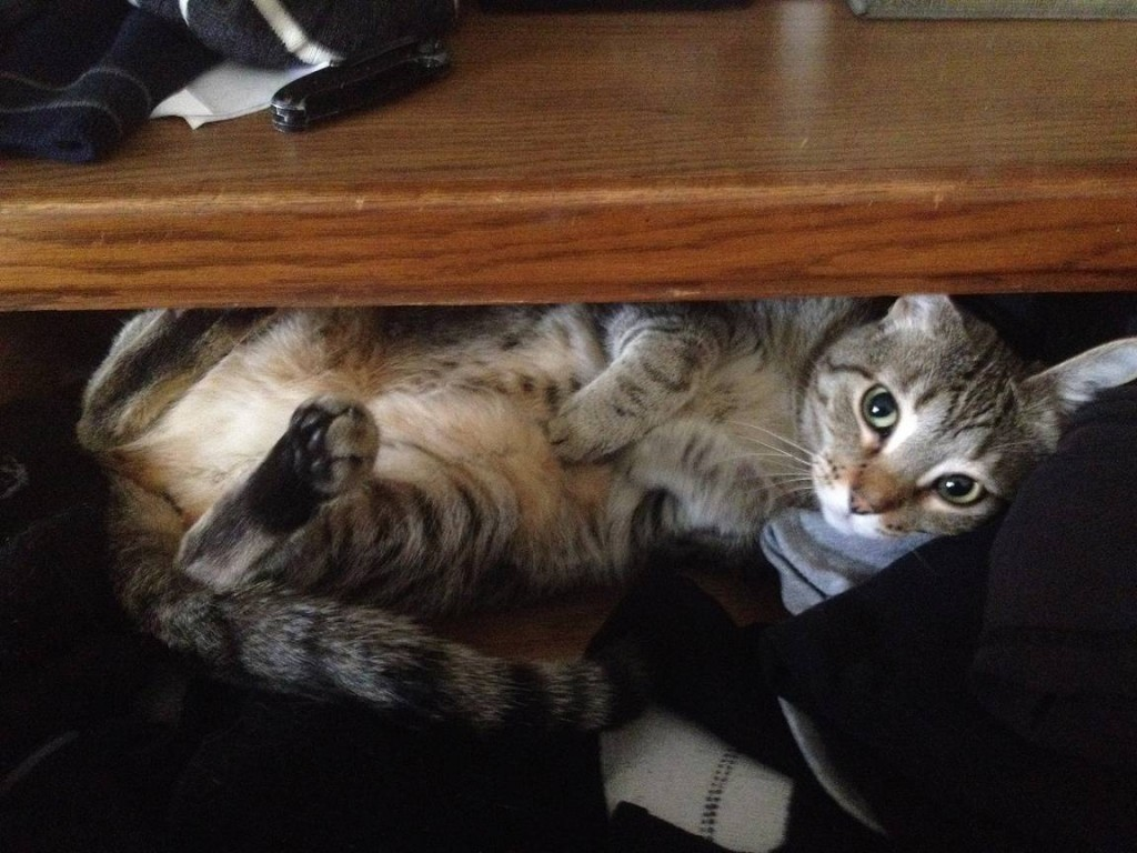 sadie in the sock drawer
