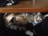 sadie-sock-drawer2