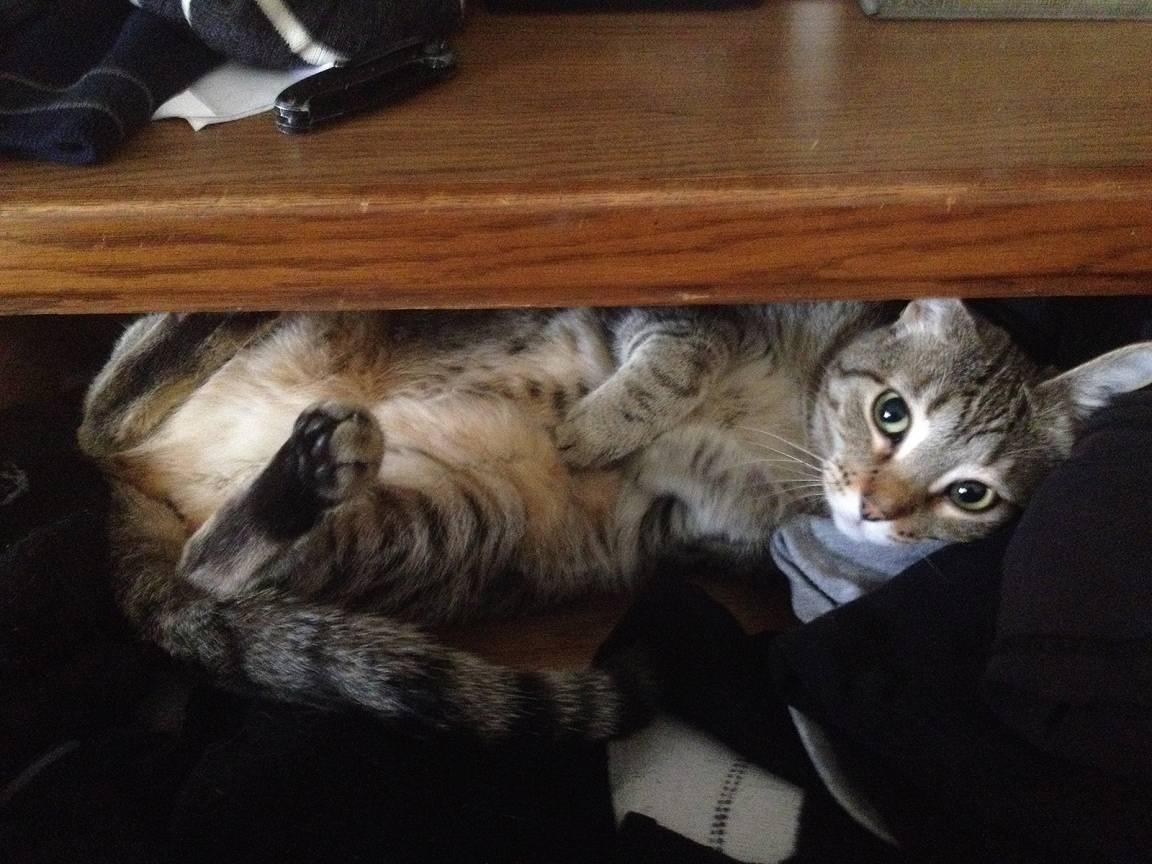 sadie in the sock drawer